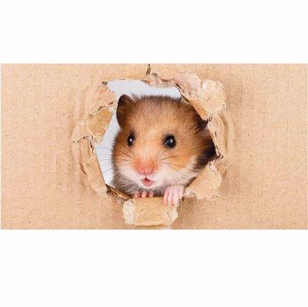 Hình ảnh cho danh mục Hamster